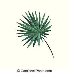 feuille, arbre, illustration, paume, vecteur, ventilateur, vert