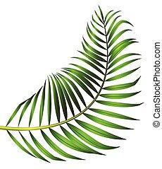 feuille, arbre, isolé, arrière-plan vert, paume, blanc