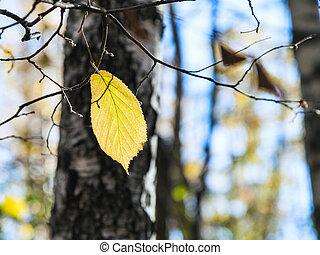 feuille, arbre noisette, jaune, automne, dernier