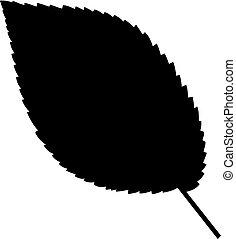 feuille arbre, orme