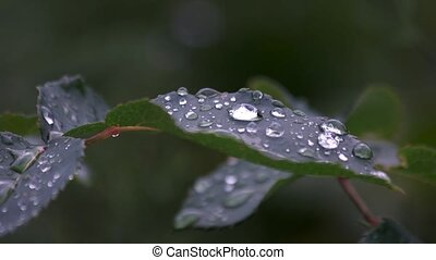 feuille, arrière-plan., gouttes, eau, nature, vert