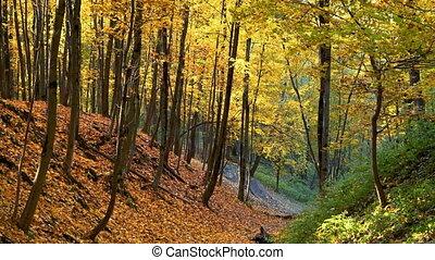 feuille autome, automne, parc