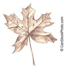 feuille automne, érable