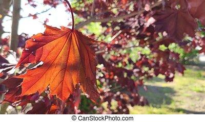 feuille, automne, arbre