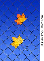 feuille automne, barrière