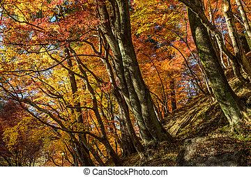 feuille automne, colline