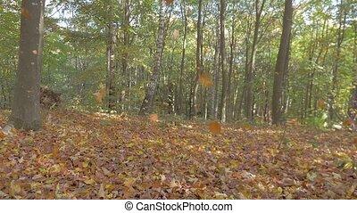 feuille automne, forêt, automne