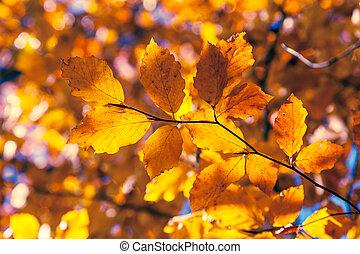 feuille automne, forêt