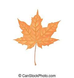 feuille automne, illustration., créatif, eau, drops., vecteur, conception, foliage., orange, élément, érable