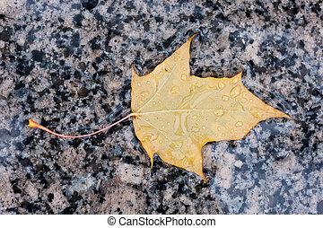 feuille automne, jaune, mouillé
