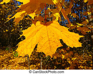 feuille automne, jaune