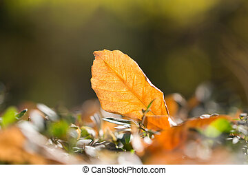 feuille automne, nature