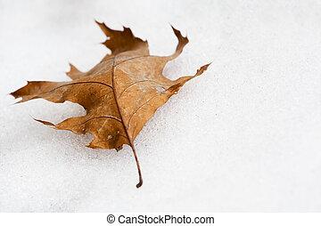 feuille automne, neige