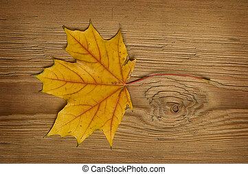 feuille automne, sur, vieux, planche