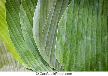 feuille, banane, texture