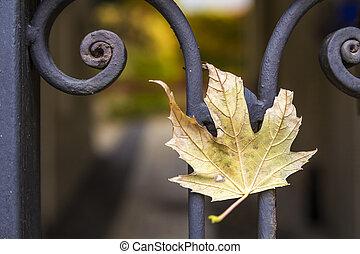 feuille, barrière, métal, jaune, automne, forgé
