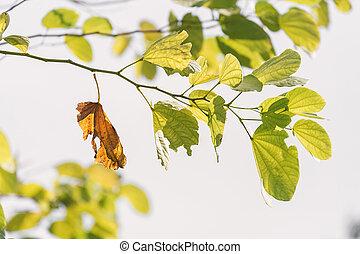feuille brune, laisse, vert, branche, vieux