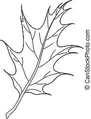 feuille chêne, ibérique, contour