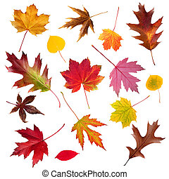 feuille, collection, automne