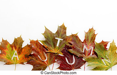 feuille, coloré, automne, automne, frontière, ou