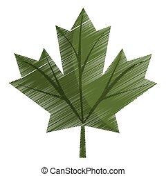 feuille, coloré, canadien, signe, vert, érable