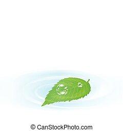 feuille, eau, sur, vert, unique
