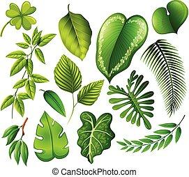 feuille, ensemble, vert