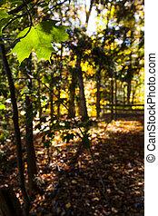 feuille, feuilles, pend, forêt verte, encore, baissé, érable