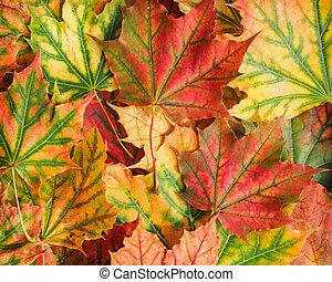 feuille, fond, automne