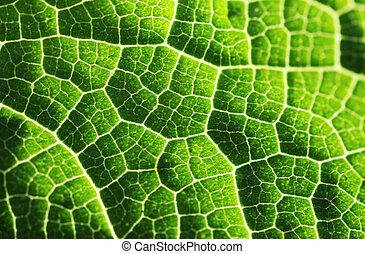 feuille, fond, texture, vert