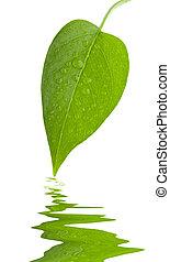 feuille, frais, vert, isolement