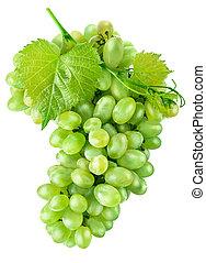 feuille, fruit, raisins verts, frais, récolte