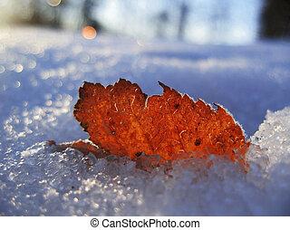 feuille, hiver, surgelé, matin, froid, rouges