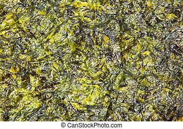 feuille, huile, texture, grand, arrière-plan., pressé, olive, frit, algue, moule, mince