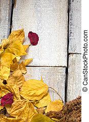 feuille image, frame., automne, space.., copie, composition