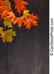 feuille image, frame., space., automne, copie, composition