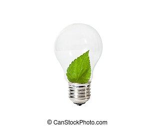 feuille, intérieur, ampoule, feu vert