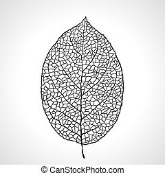 feuille, isolated., macro, illustration, vecteur, noir, naturel
