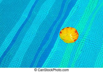 feuille jaune, piscine, natation, flotter