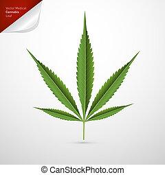 feuille, monde médical, isolé, cannabis, vecteur, fond, blanc