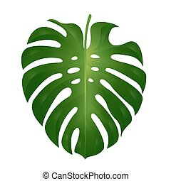 illustration vecteur de feuille tropicale plante monstera plante feuille csp6781152. Black Bedroom Furniture Sets. Home Design Ideas