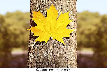 feuille, nature, saison, jaune, automne, arbre, fond, érable