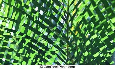 feuille, nature, vert