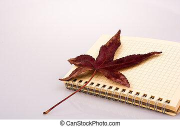 feuille, ouvert, automne, cahier, vide, baissé