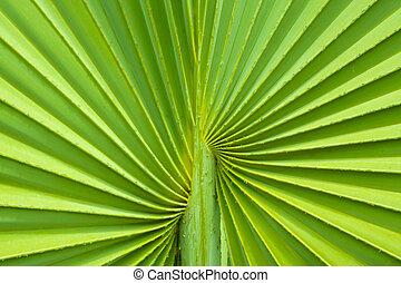 feuille, palmier, fond
