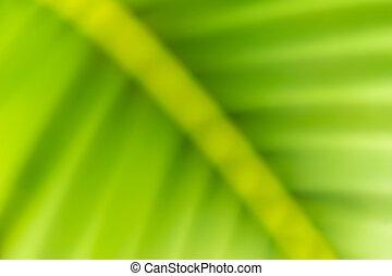 feuille paume, closeup, arrière-plan vert