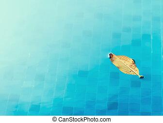 feuille, piscine