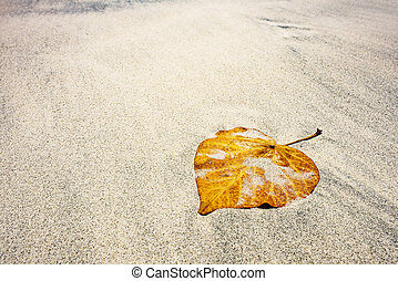 feuille, plage