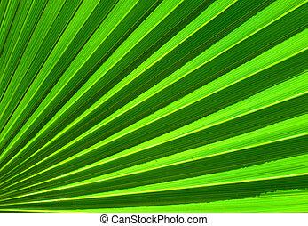 feuille, résumé, paume, closeup, fond, vert