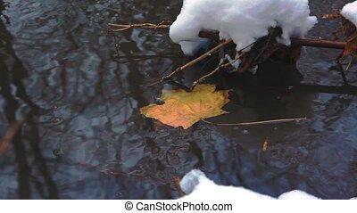 feuille, ruisseau, neige, jaune, rivage, baissé, érable, premier